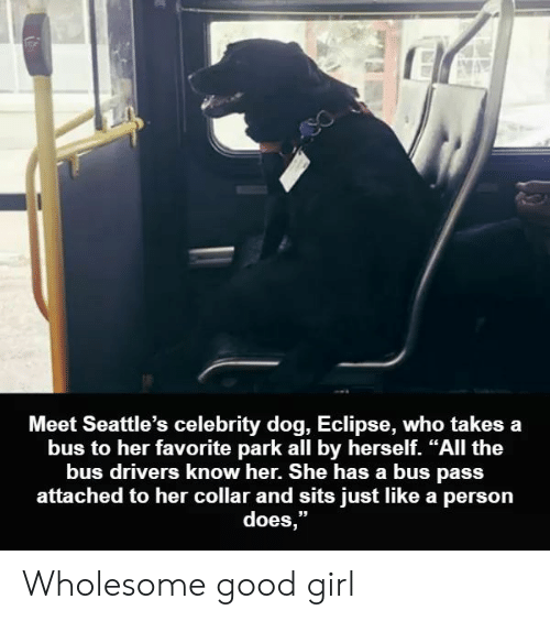 """Eclipse, Girl, and Good: Meet Seattle's celebrity dog, Eclipse, who takes a  bus to her favorite park all by herself. """"All the  bus drivers know her. She has a bus pass  attached to her collar and sits just like a person  does,"""" Wholesome good girl"""