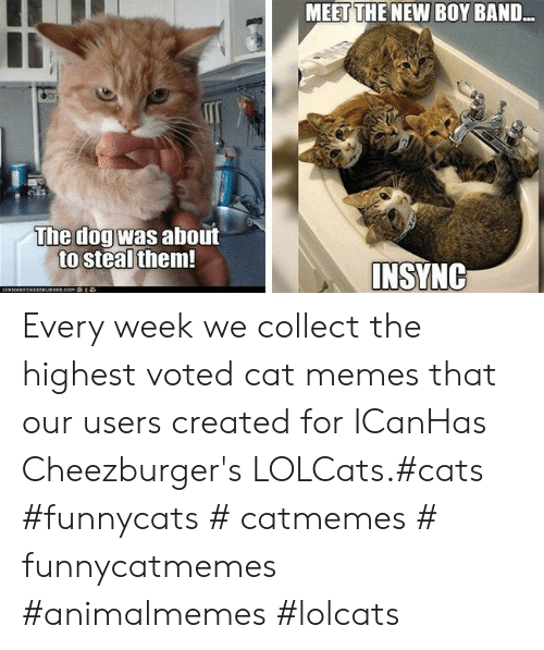 Meet The: MEET THE NEW BOY BAND..  The dogwas about  to steal them  INSYNG Every week we collect the highest voted cat memes that our users created for ICanHas Cheezburger's LOLCats.#cats #funnycats # catmemes # funnycatmemes #animalmemes #lolcats