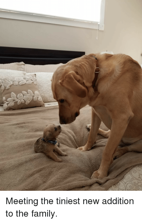 little buddy: Meeting the tiniest new addition to the family.