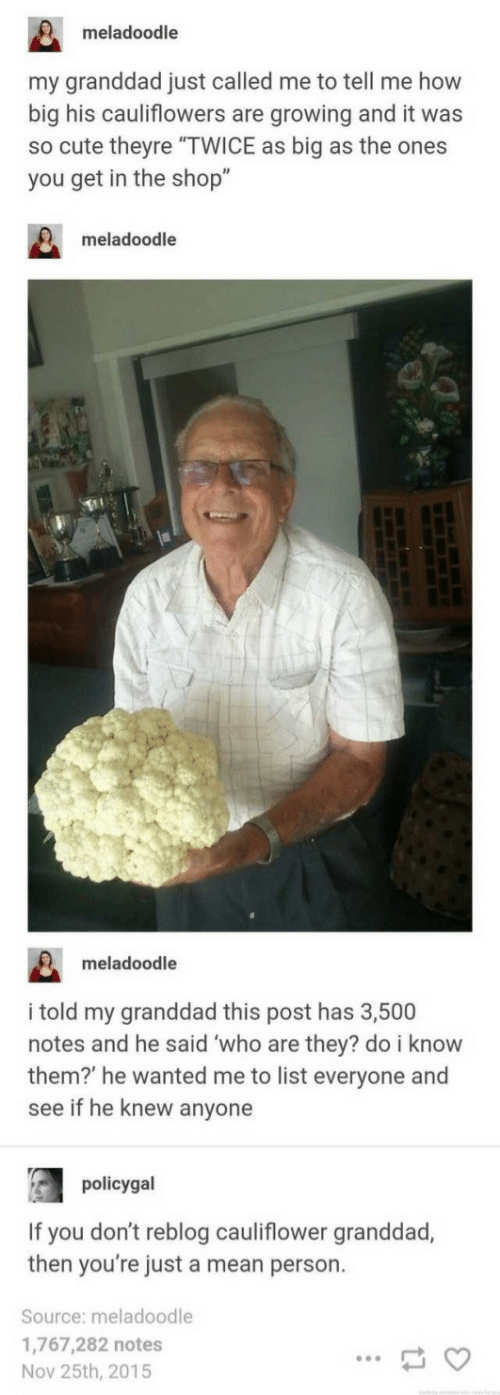 "Just Called: meladoodle  my granddad just called me to tell me how  big his cauliflowers are growing and it was  so cute theyre ""TWICE as big as the ones  you get in the shop""  meladoodle  meladoodle  i told my granddad this post has 3,500  notes and he said who are they? do i know  them? he wanted me to list everyone and  see if he knew anyone  policygal  If you don't reblog cauliflower granddad,  then you're just a mean person.  Source: meladoodle  1,767,282 notes  Nov 25th, 2015"