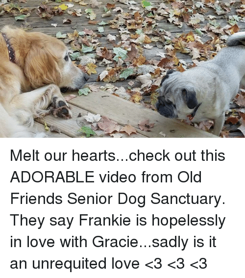 Franky: Melt our hearts...check out this ADORABLE video from Old Friends Senior Dog Sanctuary. They say Frankie is hopelessly in love with Gracie...sadly is it an unrequited love <3 <3 <3
