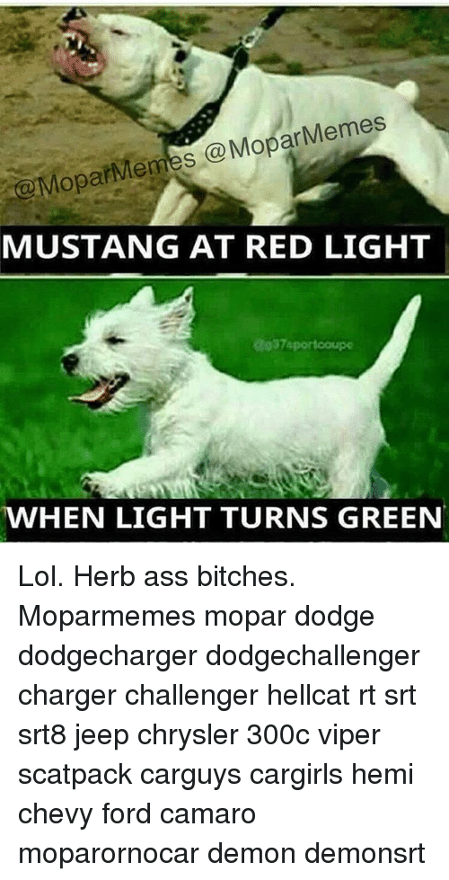 Ass, Lol, and Memes: Memes  @MoparMemes Mopar MUSTANG AT RED LIGHT  ag37sportcoupe  MWHEN LIGHT TURNS GREEN Lol. Herb ass bitches. Moparmemes mopar dodge dodgecharger dodgechallenger charger challenger hellcat rt srt srt8 jeep chrysler 300c viper scatpack carguys cargirls hemi chevy ford camaro moparornocar demon demonsrt