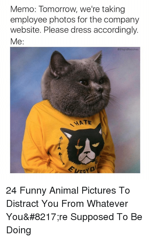 memo: Memo: Tomorrow, we're taking  employee photos for the company  website. Please dress accordingly.  Me:  @StupidResumes  HATE 24 Funny Animal Pictures To Distract You From Whatever You're Supposed To Be Doing