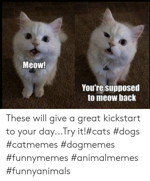 Cats, Dogs, and Back: Meow!  You're supposed  to meow back These will give a great kickstart to your day...Try it!#cats #dogs #catmemes #dogmemes #funnymemes #animalmemes #funnyanimals
