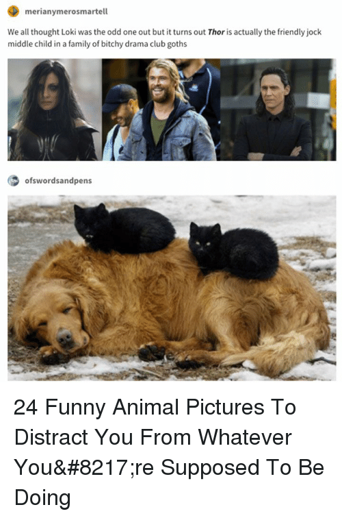 middle child: merianymerosmartell  We all thought Loki was the odd one out but it turns out Thor is actually the friendly jock  middle child in a family of bitchy drama club goths  ofswordsandpens 24 Funny Animal Pictures To Distract You From Whatever You're Supposed To Be Doing