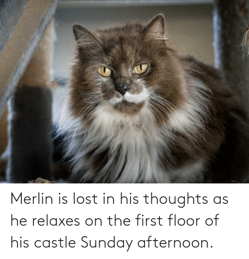 Of His: Merlin is lost in his thoughts as he relaxes on the first floor of his castle Sunday afternoon.