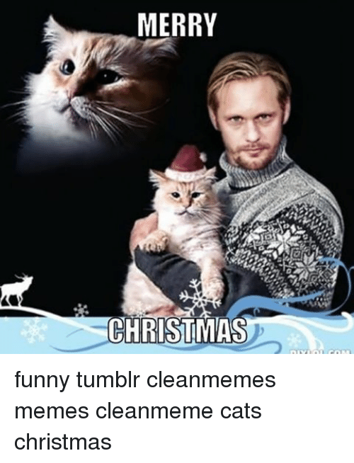 Memes, Merry Christmas, and 🤖: MERRY CHRISTMAS funny tumblr cleanmemes memes cleanmeme cats