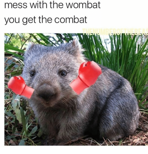 wombats: mess with the wombat  you get the combat