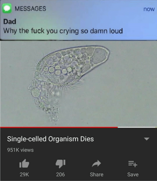 why the fuck: MESSAGES  now  Dad  Why the fuck you crying so damn loud  Single-celled Organism Dies  951K views  Share  206  29K  Save