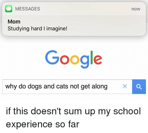 dog-and-cats: MESSAGES  noW  Mom  Studying hard l imagine!  Google  why do dogs and cats not get along  X if this doesn't sum up my school experience so far