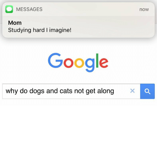 dog-and-cats: MESSAGES  noW  Mom  Studying hard l imagine!  Google  why do dogs and cats not get along  X