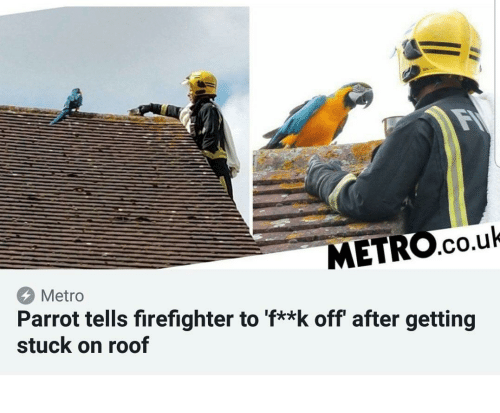 Metro, Firefighter, and Parrot: METRO.co.uk  Metro  Parrot tells firefighter to 'f**k off' after getting  stuck on roof