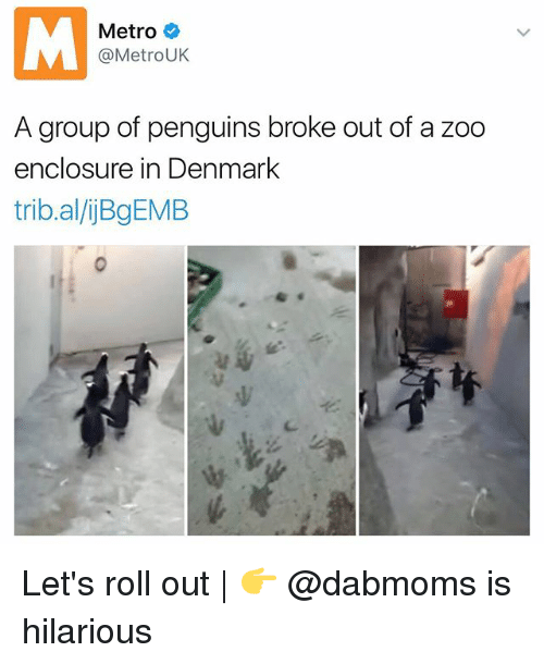 lets roll: Metro  @Metro UK  A group of penguins broke out of a zoo  enclosure in Denmark  tribal/ijBgEMB Let's roll out | 👉 @dabmoms is hilarious