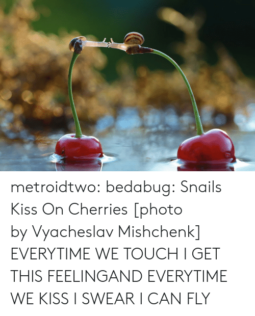 Cherries: metroidtwo:  bedabug:  Snails Kiss On Cherries [photo by Vyacheslav Mishchenk]   EVERYTIME WE TOUCH I GET THIS FEELINGAND EVERYTIME WE KISS I SWEAR I CAN FLY