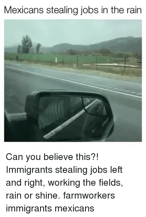 Memes, Jobs, and Rain: Mexicans stealing jobs in the rain Can you believe this?! Immigrants stealing jobs left and right, working the fields, rain or shine. farmworkers ‬ immigrants mexicans