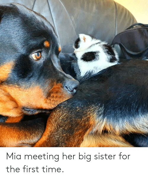 mia: Mia meeting her big sister for the first time.