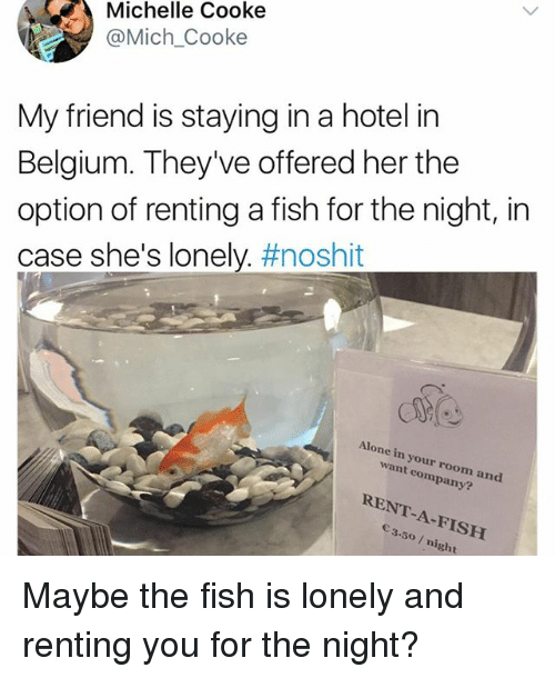Cooke: Michelle Cooke  @Mich Cooke  My friend is staying in a hotel in  Belgium. They've offered her the  option of renting a fish for the night, in  case she's lonely. #noshit  Alone in your room and  want company?  RENT-A-FISH  th Maybe the fish is lonely and renting you for the night?