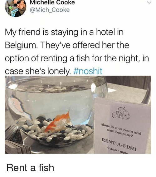 Cooke: Michelle Cooke  @Mich Cooke  My friend is staying in a hotel in  Belgium. They've offered her the  option of renting a fish for the night, in  case she's lonely. #noshit  Alone in your room and  want company?  RENT-A-FISH  3.5o/ nigl Rent a fish