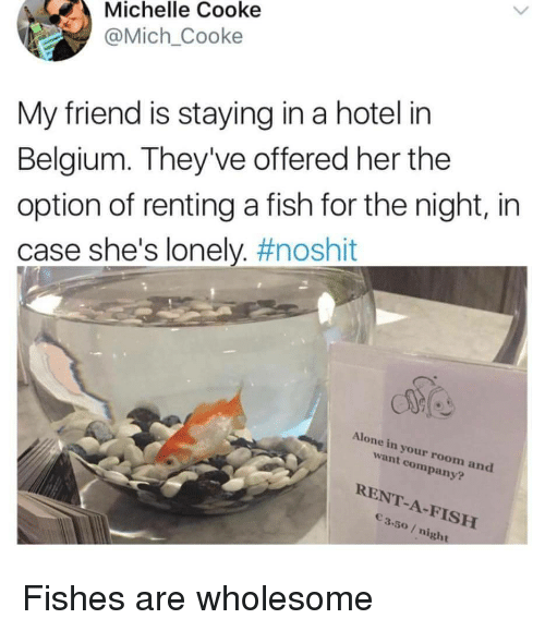 Cooke: Michelle Cooke  @Mich_Cooke  My friend is staying in a hotel in  Belgium. They've offered her the  option of renting a fish for the night, in  case she's lonely. #noshit  Alone in your room and  want company?  RENT-A-FISH  3.50/ night Fishes are wholesome