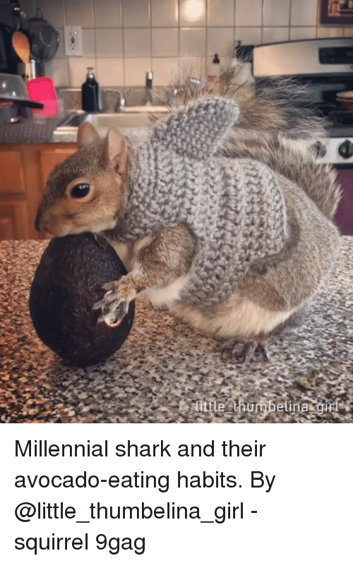 9gag, Memes, and Shark: Millennial shark and their avocado-eating habits. By @little_thumbelina_girl - squirrel 9gag