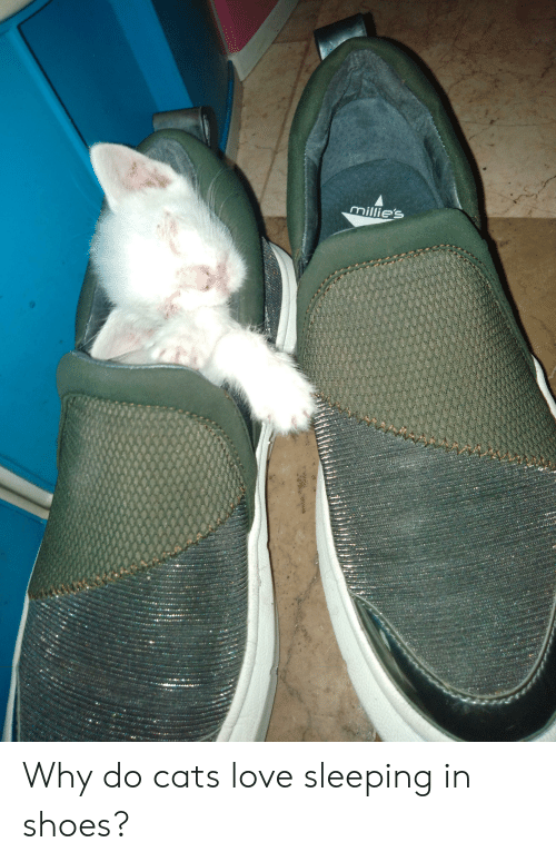 Cats, Love, and Shoes: millie's Why do cats love sleeping in shoes?