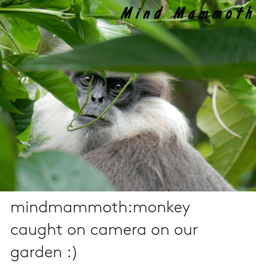 Tumblr, Blog, and Camera: Mind Mammoth mindmammoth:monkey caught on camera on our garden :)