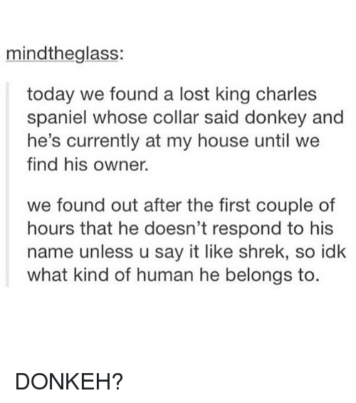 Donkey, Memes, and My House: mindtheglass:  today we found a lost king charles  spaniel whose collar said donkey and  he's currently at my house until we  find his owner.  we found out after the first couple of  hours that he doesn't respond to his  name unless u say it like shrek, so idk  what kind of human he belongs to DONKEH?
