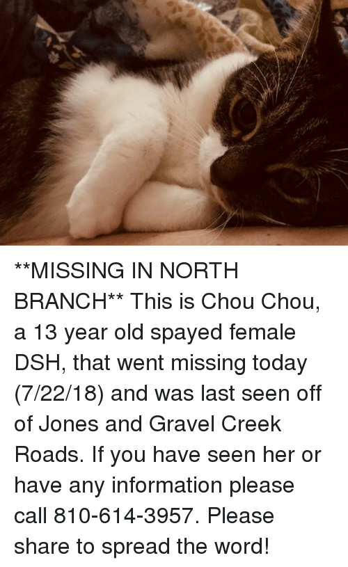 Memes, Information, and Today: **MISSING IN NORTH BRANCH**  This is Chou Chou, a 13 year old spayed female DSH, that went missing today (7/22/18) and was last seen off of Jones and Gravel Creek Roads.  If you have seen her or have any information please call 810-614-3957.  Please share to spread the word!