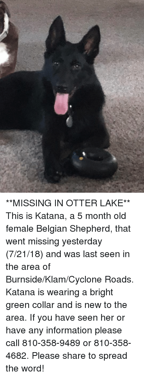 Memes, Information, and Word: **MISSING IN OTTER LAKE** This is Katana, a 5 month old female Belgian Shepherd, that went missing yesterday (7/21/18) and was last seen in the area of Burnside/Klam/Cyclone Roads.  Katana is wearing a bright green collar and is new to the area.  If you have seen her or have any information please call 810-358-9489 or 810-358-4682.  Please share to spread the word!