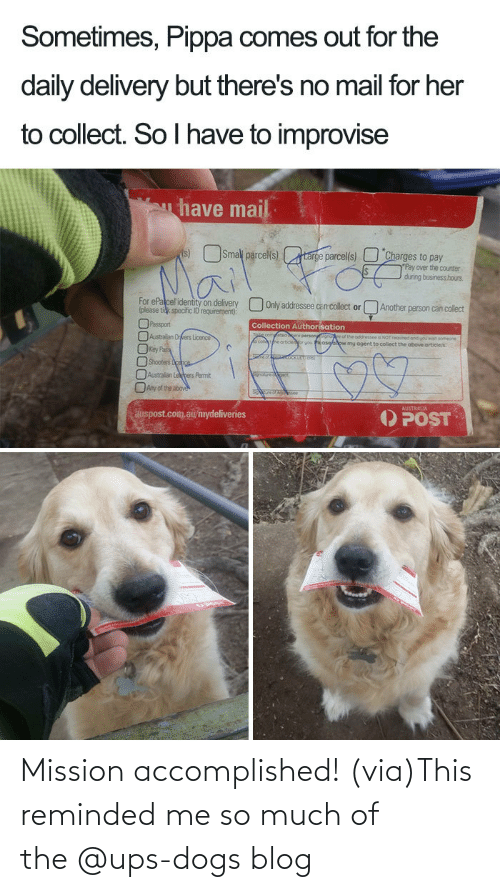 Https Www Facebook Com: Mission accomplished! (via)This reminded me so much of the @ups-dogs blog