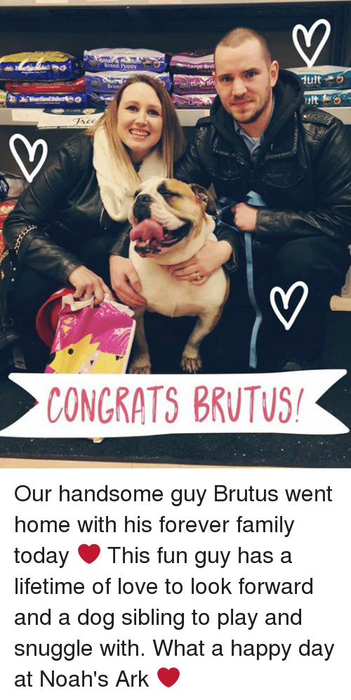 Memes, Noah, and Lifetime: Mlt  CONGRATS BRUTUS! Our handsome guy Brutus went home with his forever family today ❤️ This fun guy has a lifetime of love to look forward and a dog sibling to play and snuggle with. What a happy day at Noah's Ark ❤️
