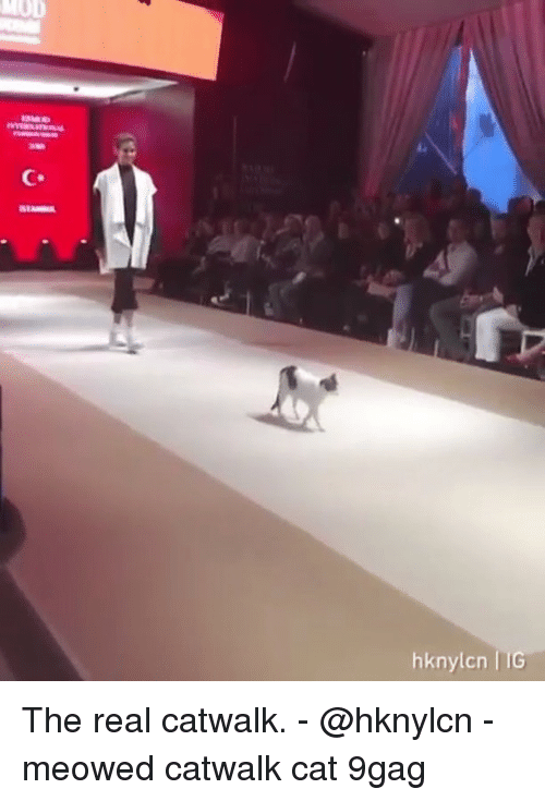 9gag, Memes, and The Real: MOD  hknylcn IIG The real catwalk. - @hknylcn - meowed catwalk cat 9gag