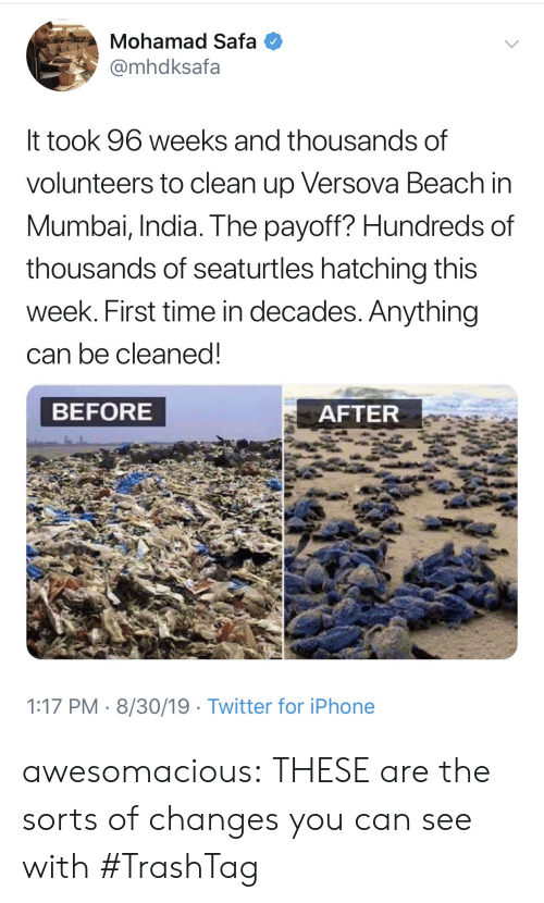 Iphone, Tumblr, and Twitter: Mohamad Safa  @mhdksafa  It took 96 weeks and thousands of  volunteers to clean up Versova Beach in  Mumbai, India. The payoff? Hundreds of  thousands of seaturtles hatching this  week. First time in decades. Anything  can be cleaned!  BEFORE  AFTER  1:17 PM 8/30/19 Twitter for iPhone awesomacious:  THESE are the sorts of changes you can see with #TrashTag