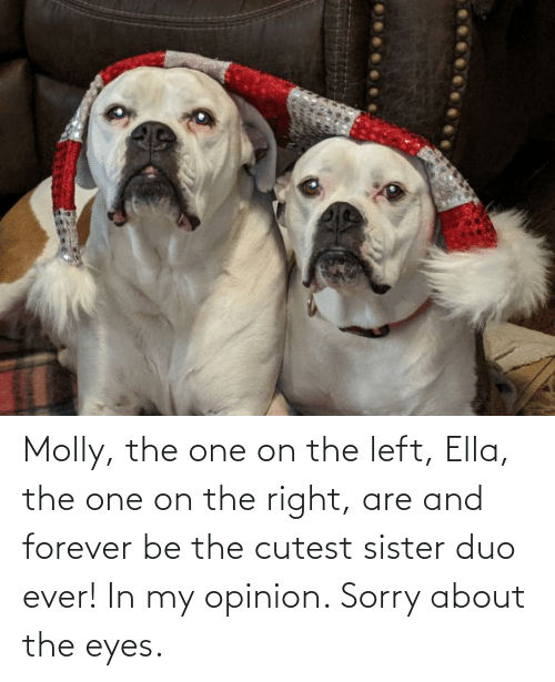 ella: Molly, the one on the left, Ella, the one on the right, are and forever be the cutest sister duo ever! In my opinion. Sorry about the eyes.