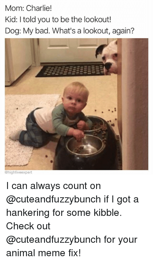 Animal Meme: Mom: Charlie!  Kid: I told you to be the lookout!  Dog: My bad. What's a lookout, again?  0  @highfiveexpert I can always count on @cuteandfuzzybunch if I got a hankering for some kibble. Check out @cuteandfuzzybunch for your animal meme fix!