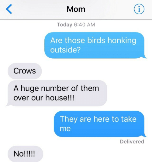 Birds, House, and Today: Mom  Today 6:40 AM  Are those birds honking  outside?  Crows  A huge number of them  over our house!!!  They are here to take  me  Delivered