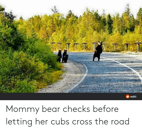 The Road: Mommy bear checks before letting her cubs cross the road
