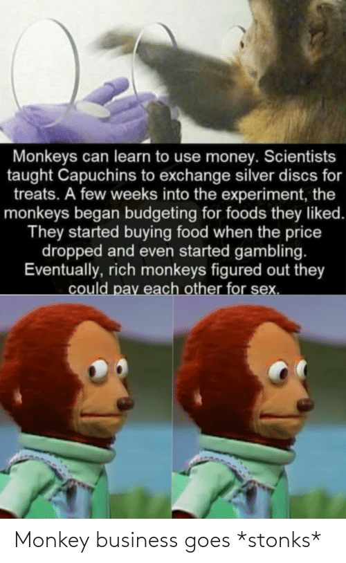 Business: Monkey business goes *stonks*