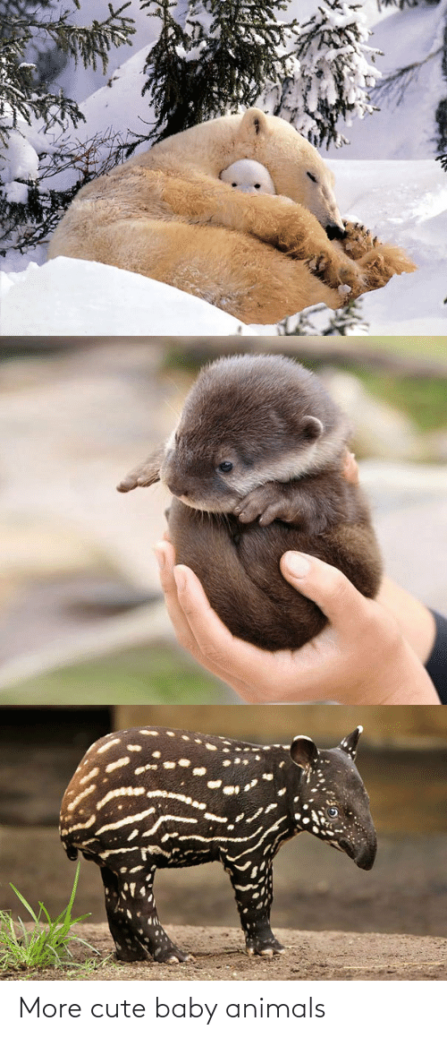 Baby: More cute baby animals