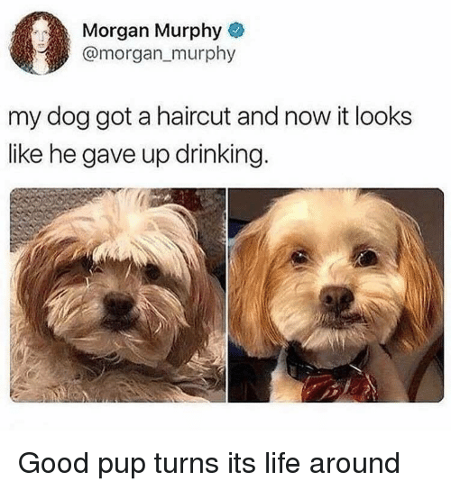 Drinking, Haircut, and Life: Morgan Murphy&  @morgan murphy  my dog got a haircut and now it looks  like he gave up drinking. Good pup turns its life around