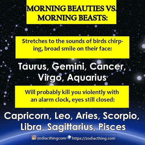 Taurus: MORNING BEAUTIES VS  MORNING BEASTS:  Stretches to the sounds of birds chirp-  ing, broad smile on their face:  Taurus, Gemini, Cancer,  Virgo, Aquarius  Will probably kill you violently with  an alarm clock, eyes still closed:  Capricorn, Leo, Aries, Scorpio,  Libra, Sagittarius, Pisces  zodiacthingcomhttps://zodiacthing.com