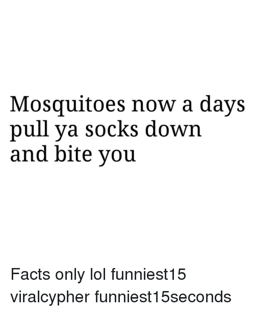 Facts Only: Mosquitoes now a days  pull ya socks down  and bite you Facts only lol funniest15 viralcypher funniest15seconds