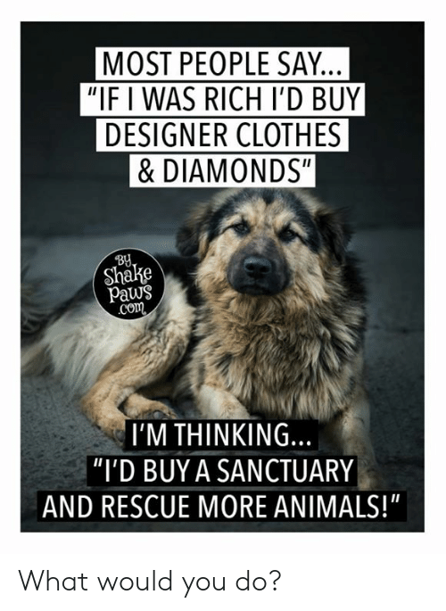 "Animals, Clothes, and Memes: MOST PEOPLE SAY.  ""IF I WAS RICH I'D BUY  DESIGNER CLOTHES  &DIAMONDS""  BU  Shake  paws  co  I'M THINKING.  ""I'D BUY A SANCTUARY  AND RESCUE MORE ANIMALS!"" What would you do?"