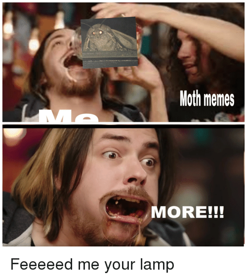 Memes, Moth, and Lamp: Moth memes  MORE!!! Feeeeed me your lamp
