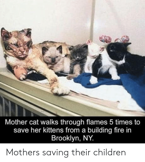 Children, Fire, and Brooklyn: Mother cat walks through flames 5 times to  save her kittens from a building fire in  Brooklyn, NY Mothers saving their children
