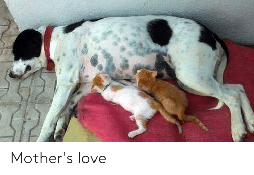 Mothers: Mother's love