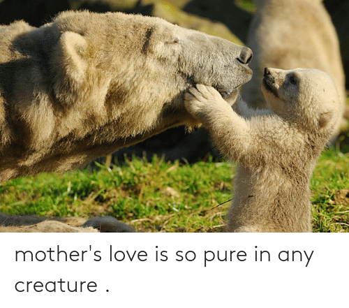 Mothers: mother's love is so pure in any creature .