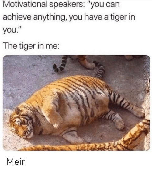 """speakers: Motivational speakers: """"you can  achieve anything, you have a tiger in  you.""""  The tiger in me: Meirl"""