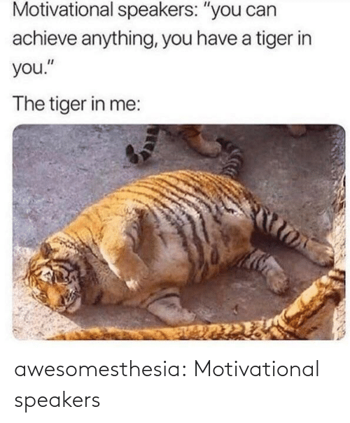 "Tumblr, Blog, and Tiger: Motivational speakers: ""you can  achieve anything, you have a tiger in  you.""  The tiger in me: awesomesthesia:  Motivational speakers"