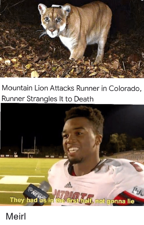 Colorado, Death, and Lion: Mountain Lion Attacks Runner in Colorado,  Runner Strangles It to Death  They had us in he  h not gonna lie Meirl